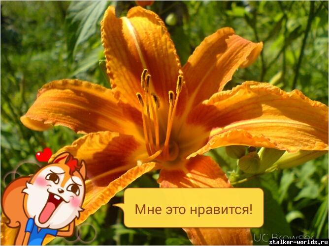 sw_1431676275__tmpdoodle1431676264840.jp