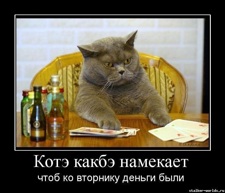 sw_1467212873__h-529.jpg