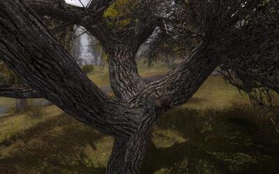 Тайник Кузнецова (на ветвистом дереве Кордон).jpg